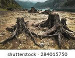 Tree Stumps After Deforestatio...