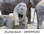 Stock photo two baby elephants playing in the sand 284099183