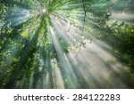 Sun Rays Through The Trees In...