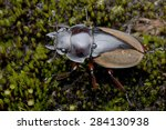 macro image of a stag beetle | Shutterstock . vector #284130938