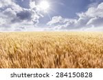 wheat field | Shutterstock . vector #284150828