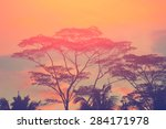 trees silhouettes on the sunset ... | Shutterstock . vector #284171978