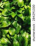green leaves background. grass... | Shutterstock . vector #284291330