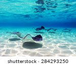 stingrays at stingray city in... | Shutterstock . vector #284293250