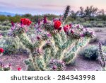Blooming Buckhorn Cholla In...