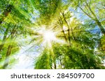 bright sun in the forest | Shutterstock . vector #284509700