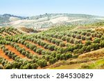 autumn landscape with olives... | Shutterstock . vector #284530829