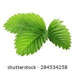 green leaves of strawberries... | Shutterstock . vector #284534258
