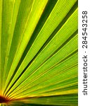 palm tree leaf as a background... | Shutterstock . vector #284543258