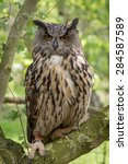 Stock photo european eagle owl shot with green foliage background 284587589