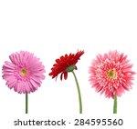 daisy  gerbera daisy  pink. | Shutterstock . vector #284595560