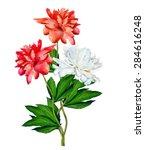 Stock photo peony flowers isolated on white background 284616248