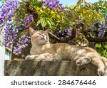 Cat On Stone Fence Over Garden...
