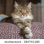 Stock photo cat resting cat on a sofa in colorful blur background cute funny cat close up young playful cat 284741180