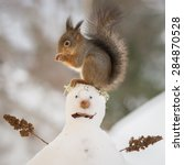 Red Squirrel Standing On A Sno...