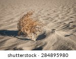 Tumble Weed Lays In The Sand Of ...