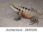 a detailed water dragon lizard   Shutterstock . vector #2849200