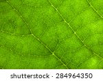 Macro Photo Of Leaf Texture.