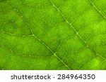 Macro Photo Of Leaf Texture.
