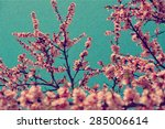 apricot tree branch with...   Shutterstock . vector #285006614
