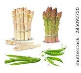 vector vegetable set. ... | Shutterstock .eps vector #285092720