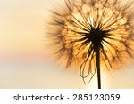 dandelion close up silhouette... | Shutterstock . vector #285123059