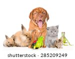 Stock photo group of pets together in front view isolated on white background 285209249