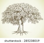 cute mighty tree with hollow... | Shutterstock .eps vector #285238019