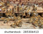 group of honeybees in front of... | Shutterstock . vector #285306413