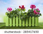 Flower Box With Geranium On...