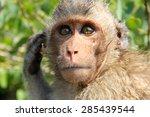 Look Monkey Portrait Of Monkey