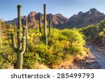 Blooming Sonoran Desert At...