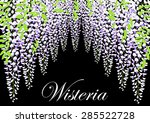 blooming wisteria branch with... | Shutterstock .eps vector #285522728