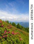 Small photo of Alpine Rose On Mt. Gerlitzen