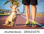 Stock photo chihuahua dog close together to owner walking with leash outside at the park dog looking up at 285631070