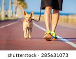 Stock photo chihuahua dog close together to owner walking with leash outside at the park as friends 285631073