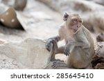 monkey | Shutterstock . vector #285645410