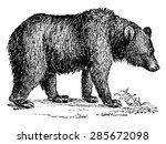 Brown Bear  Vintage Engraved...