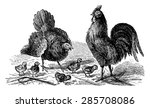 Hen  Rooster And Chicks ...