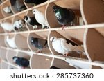 Birds  Doves In The Dovecote