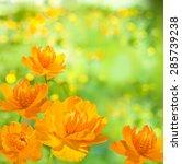 Orange Flower On The Bright...