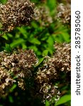 brown wild shrubbery   Shutterstock . vector #285785060