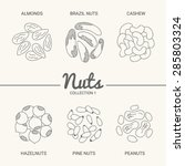 set of six nuts. almonds ... | Shutterstock .eps vector #285803324