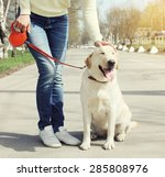 Stock photo owner and happy labrador retriever dog outdoors walking in summer day 285808976