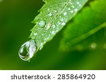 Small photo of Leaves with drops of water. Can be used as background