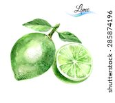 watercolor fruit lime isolated... | Shutterstock .eps vector #285874196