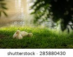 Two Baby Goose Lying On Grass...