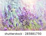 lavender flower | Shutterstock . vector #285881750