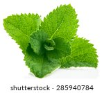 fresh leaf mint. isolated on... | Shutterstock . vector #285940784