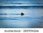fin of a shark in the high sea. | Shutterstock . vector #285954266